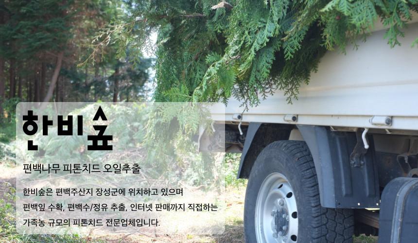 편백나무 오일 추출