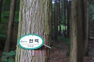 장성편백숲